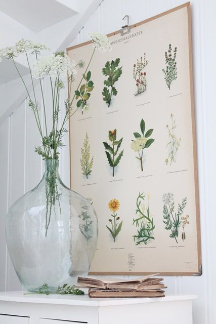 roślinność, plakat