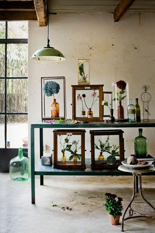 zieleń w domu